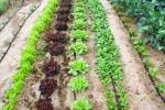 ecologic-410
