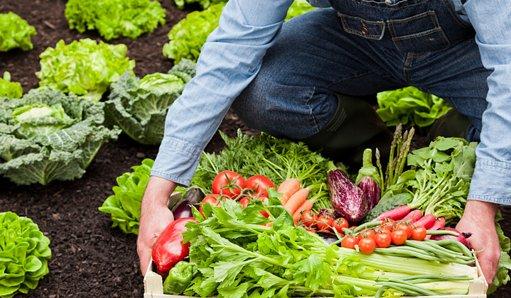 Quién Tiene Miedo De La Agricultura Ecológica Ii Esther
